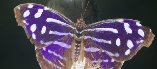 Costa Rica -  058
