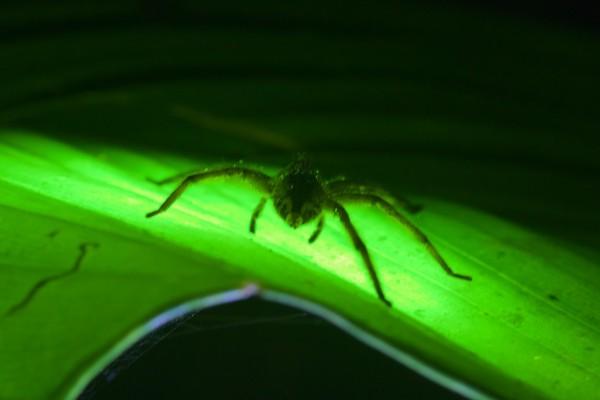 Costa Rica -  061
