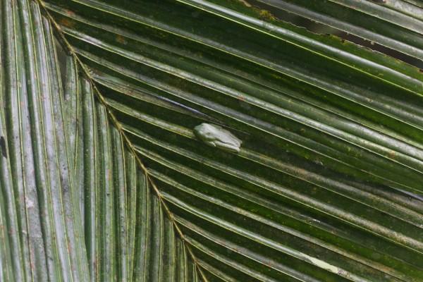 Costa Rica -  075