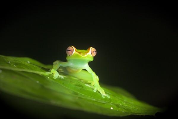 Costa Rica -  076