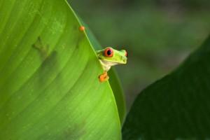 Costa Rica -  080