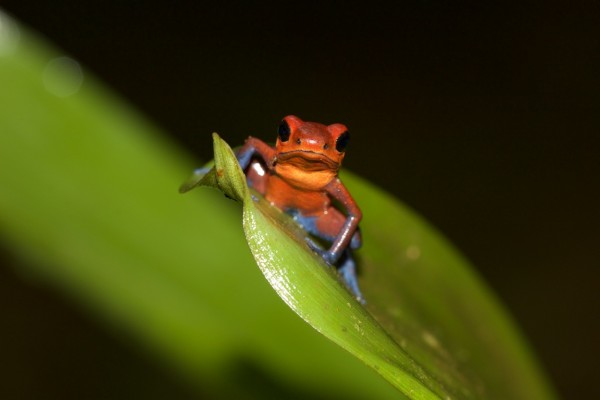 Costa Rica -  088