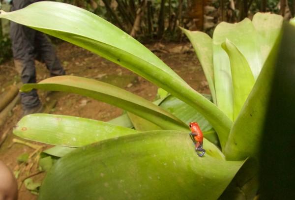 Costa Rica -  093