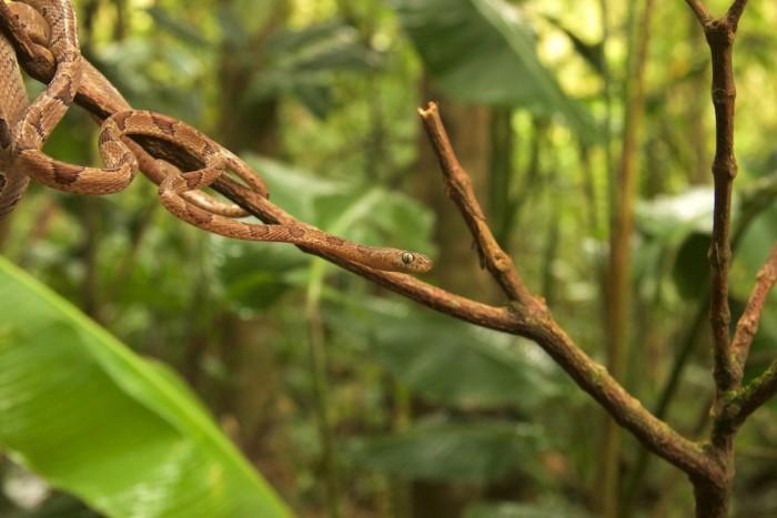 Costa Rica -  119