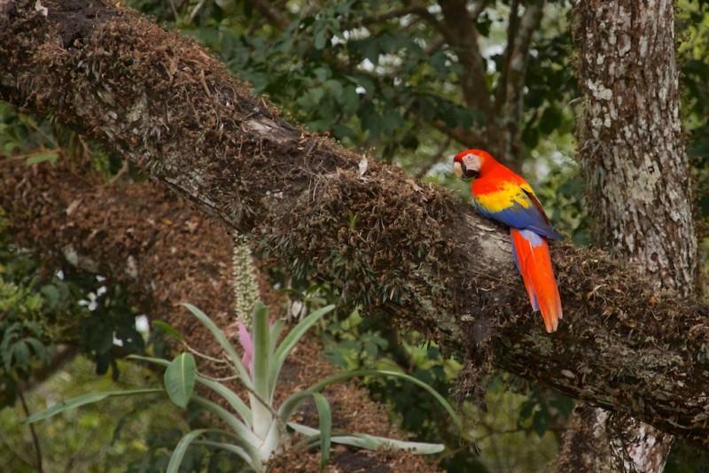 Costa Rica -  214
