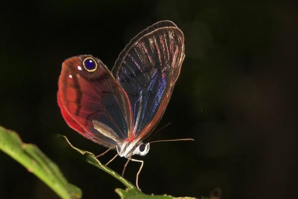 Costa Rica -  72