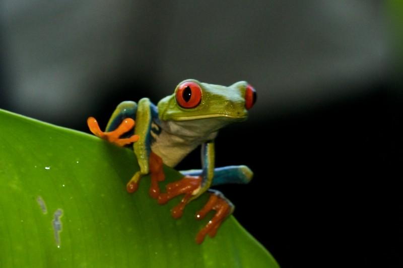 Costa Rica -  80