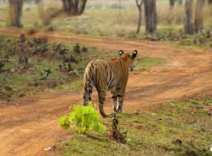India 2015 - selectie - 73 van 118