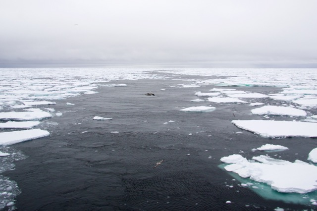 Spitsbergen - selectie - 83 van 105