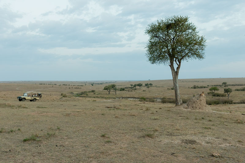 Kenia 2017-0611-2