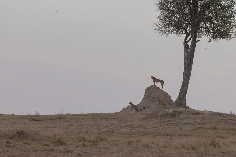 Kenia 2017-0645