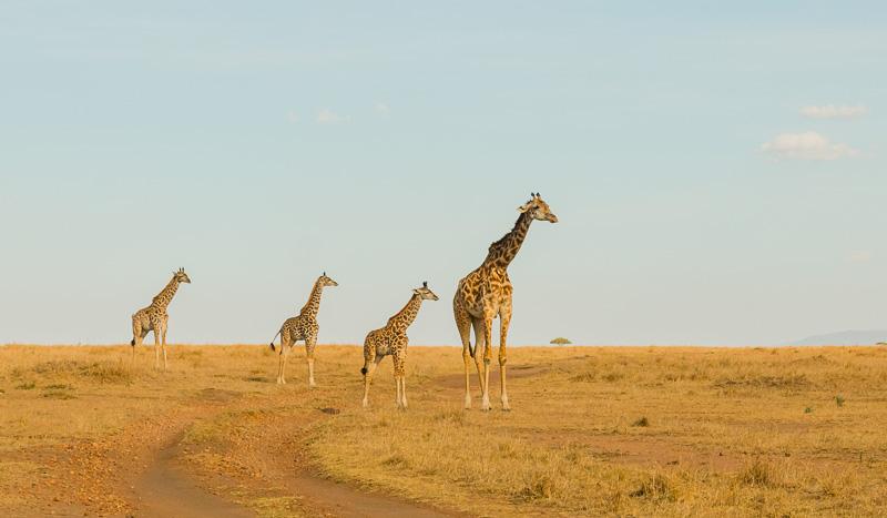 Kenia 2017-0750-2
