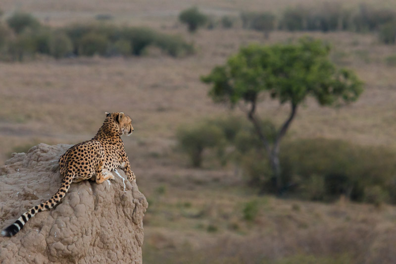 Kenia 2017-0756