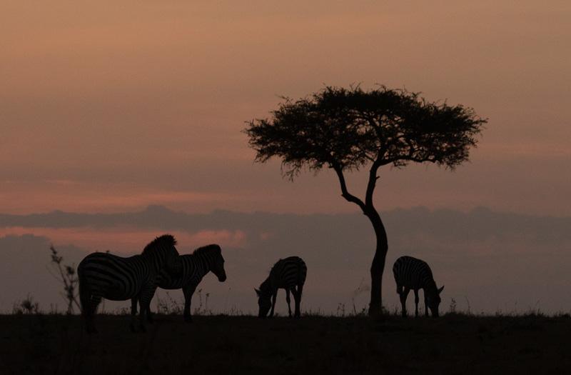 Kenia 2017-0775