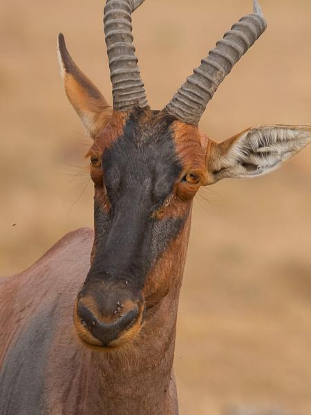 Kenia 2017-0979