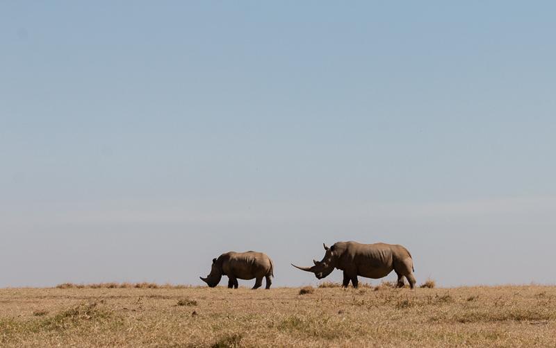 Kenia 2017-9651